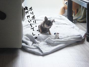 DSC07947.jpg