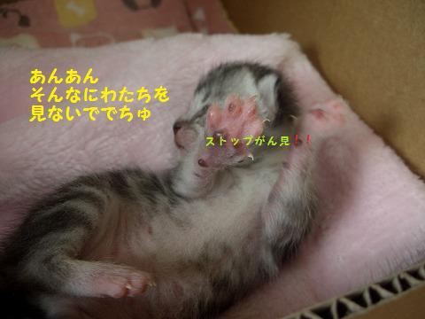 子猫0620 038