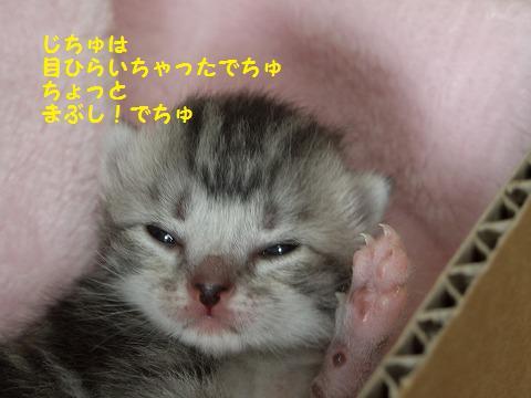 子猫0620 017