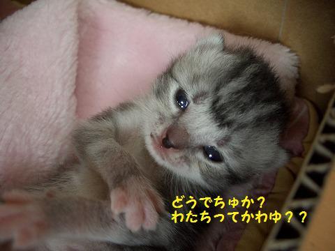 子猫0620 045
