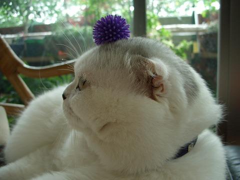 多肉金銀猫 103