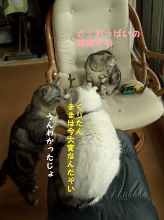 0625ねこ 041