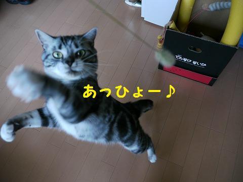 0924ねこ 066