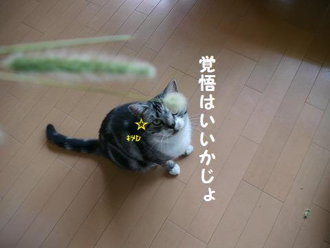 0924ねこ 060
