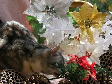 ねこ1115クリスマス 114