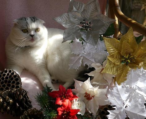 ねこ1115クリスマス 088