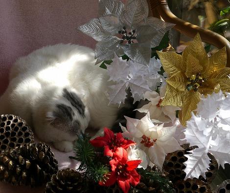 ねこ1115クリスマス 086