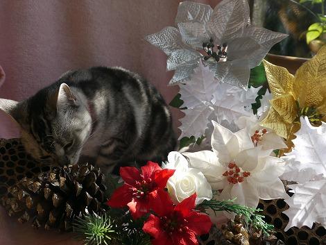 ねこ1115クリスマス 168