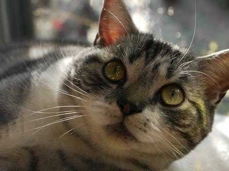 新春猫 046