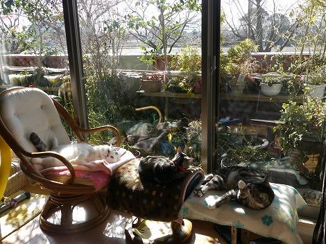 新春猫 033