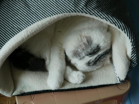 猫花 074