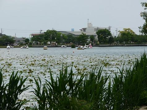 池はボートでいっぱい