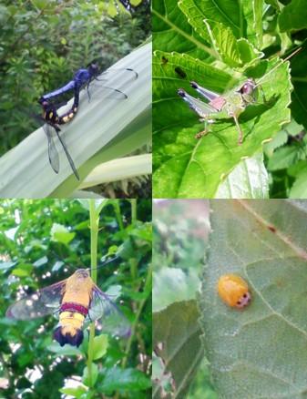 昆虫図鑑09