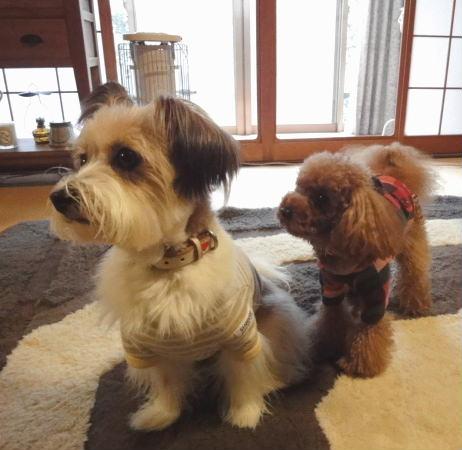 並ぶ犬たち2