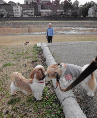 待っている飼い主さんと兄弟犬