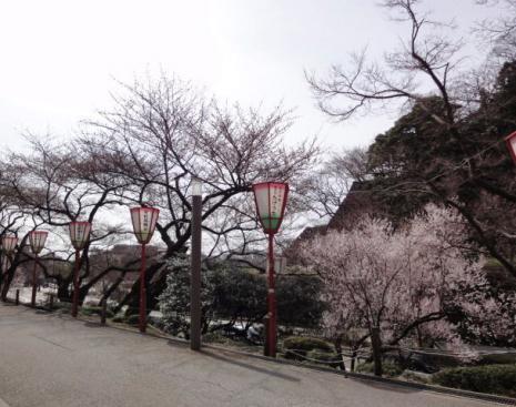 ソメイヨシノではない桜