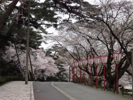 兼六園桜並木