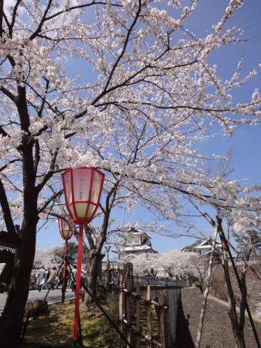 桜と金沢城