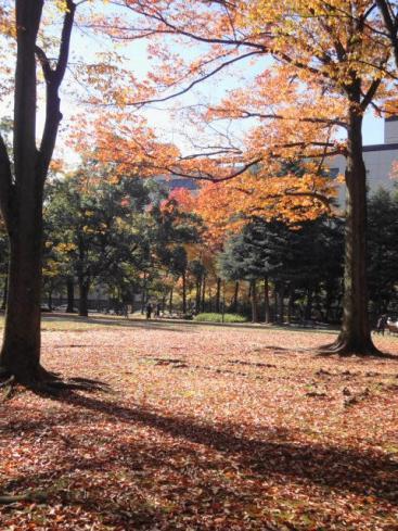 中央公園5