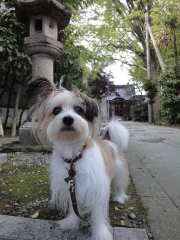 八幡神社で。