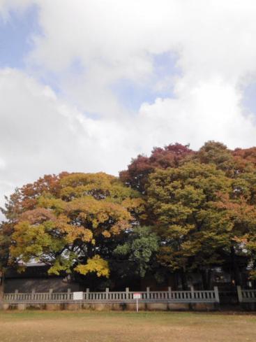 中村神社の木々