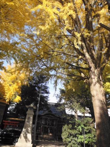 泉八幡神社の大イチョウ
