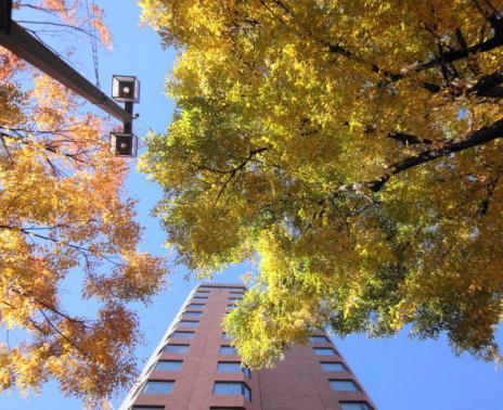 香林坊の街路樹