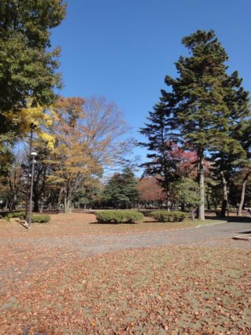 中央公園秋景