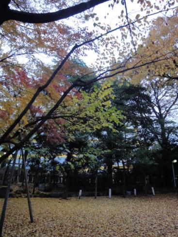春日神社~。