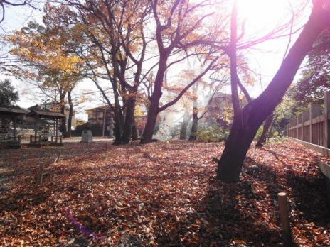 落葉の景色