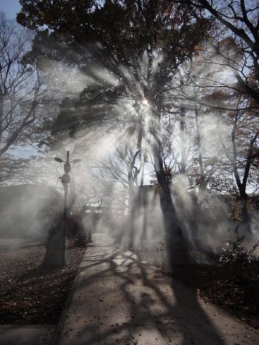 煙と太陽光のこらぼ