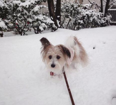 雪の中歩行