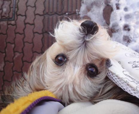 上から見た袋犬
