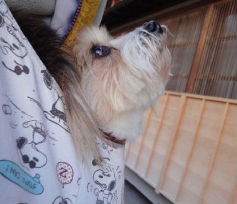 見上げる袋犬