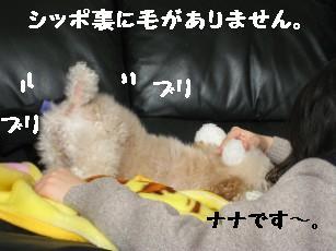 201127画像 247