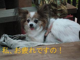 2009_0725_174637-IMG_5379.jpg