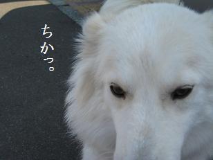 2009_0810_143241-IMG_5686.jpg