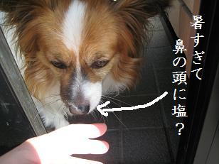 2009_0810_143440-IMG_5694.jpg
