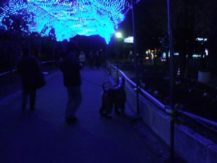 2008_12070092.jpg