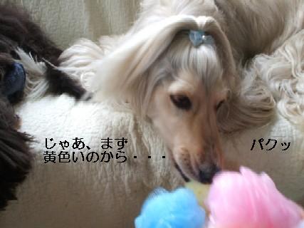 2009_01290042.jpg