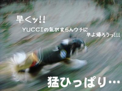 2008113009.jpg
