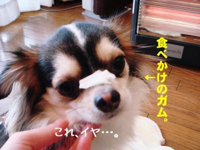2009011007.jpg