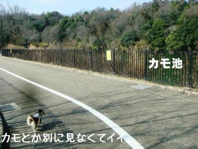 2009020604.jpg