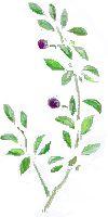 olive1.jpg