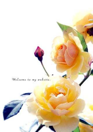 rose06m.jpg