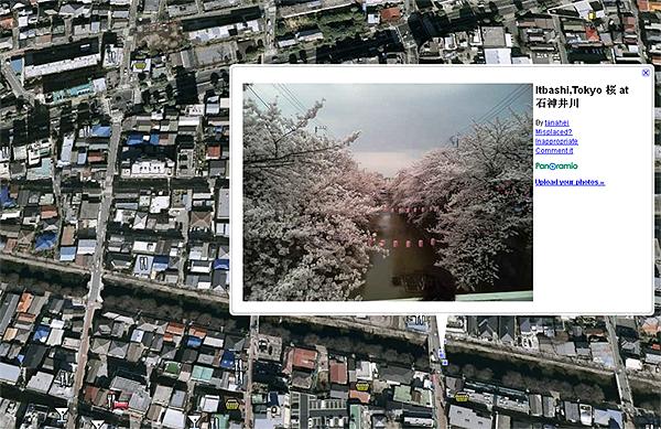 japan-sakura.jpg