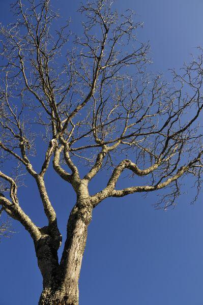 2009年1月1日大好きな木