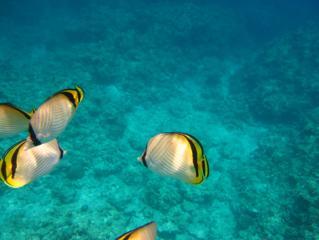 ★沖縄の海~1★
