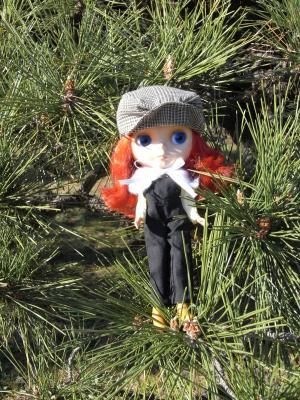 松の葉の上でチクチク日向ぼっこ