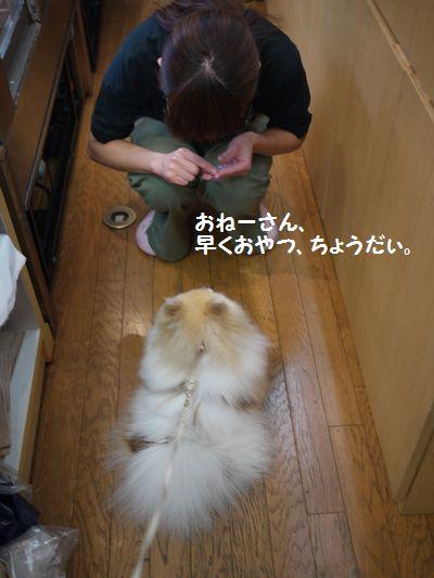 009_20100623125943.jpg
